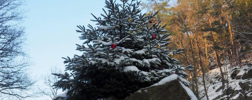 Öko-Weihnachtsbaum