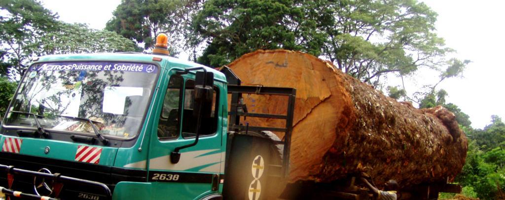 Abtransport eines Tropenbaumes