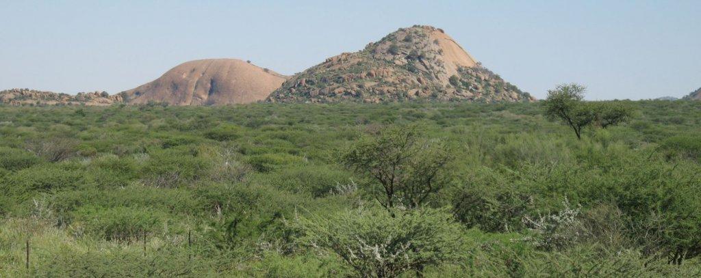 Verbuschte Dornensavanne in Namibia