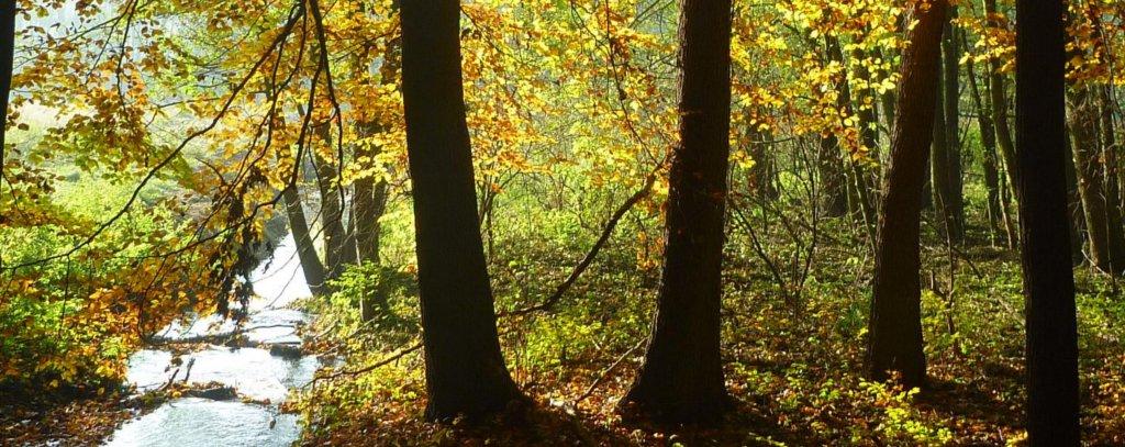 Waldfoto: Annette Littmeier