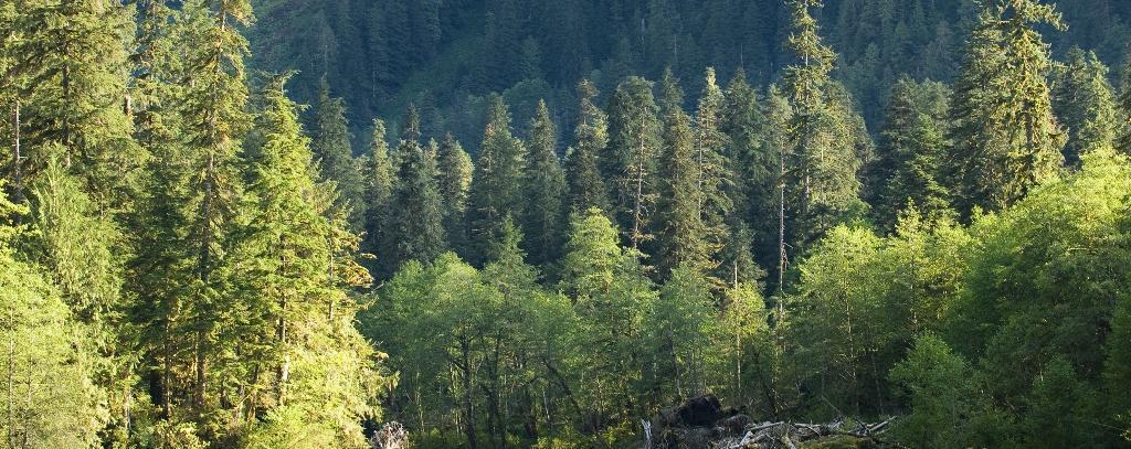 Great Bear Rainforest Wald