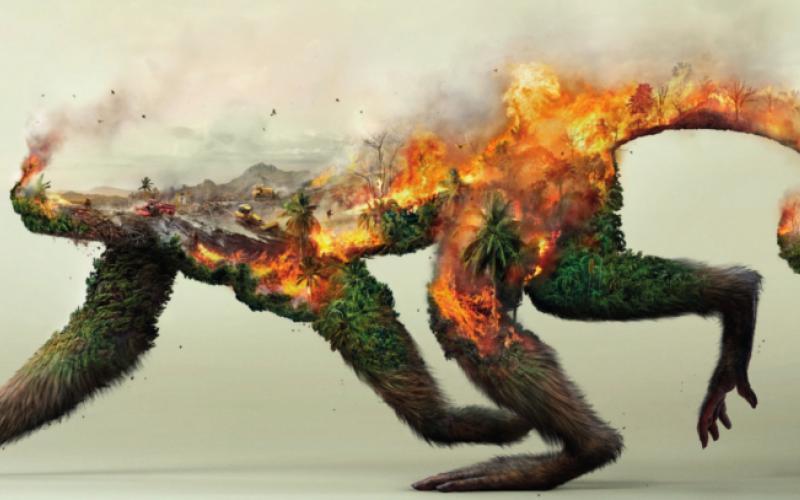 Motiv Brennender Affe