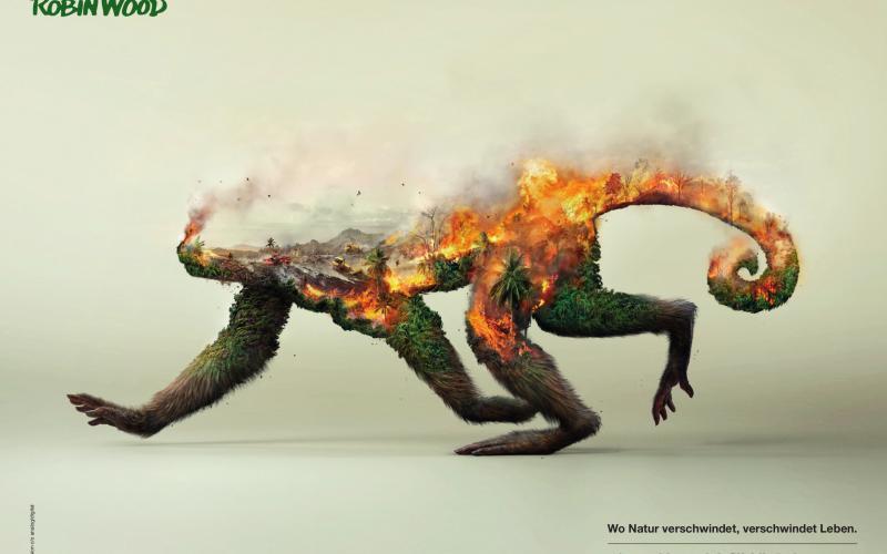 """Poster """"Tiere verschwinden: Affe"""""""
