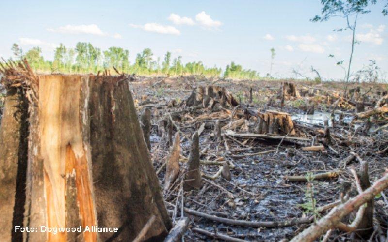 Baumstumpf-Foto: Dogwood Alliance