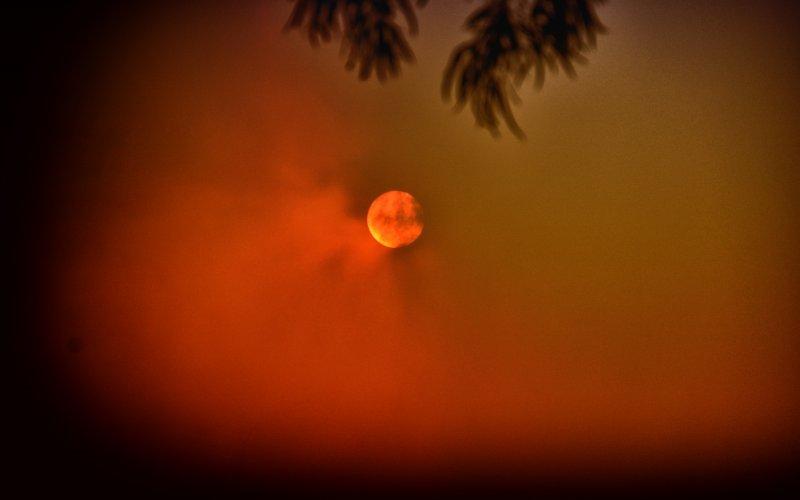 Nachmittagssonne in NSW, Australien während der Buschfeuersaison 2019-2020
