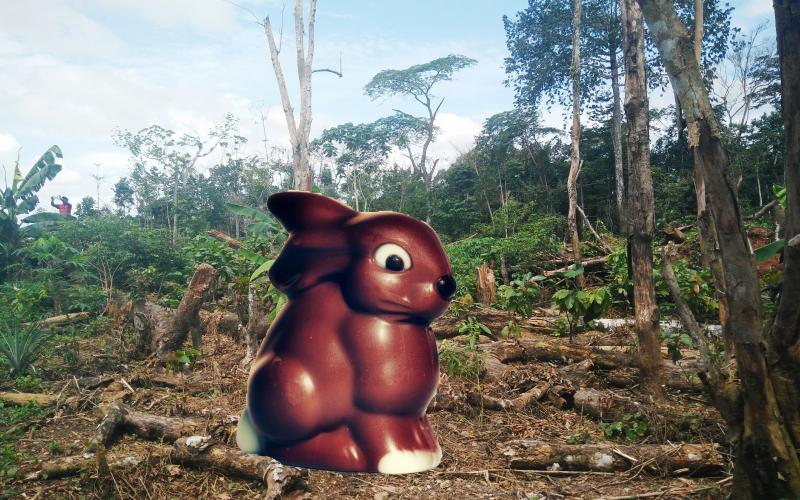 Collage Hase vor abgeholztem Tropenwald