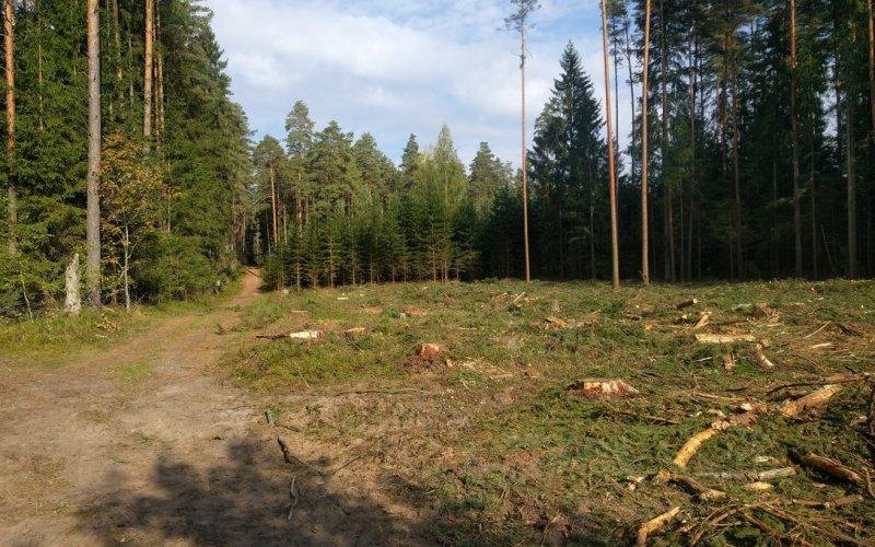 Kalhlschlag in Estland