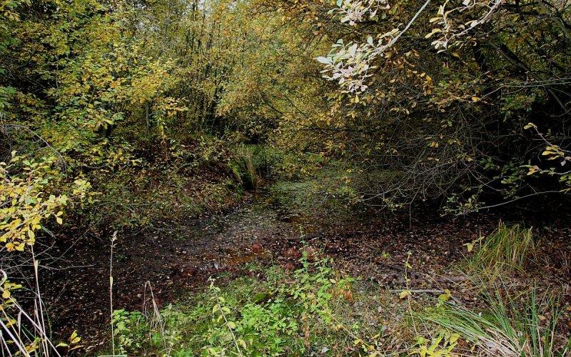 Der Muna-Wald bietet Lebensraum für viele Arten (Foto: Herbert Kraus)