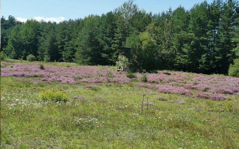 Heideflächen im Muna-Wald (Foto: Herbert Kraus)