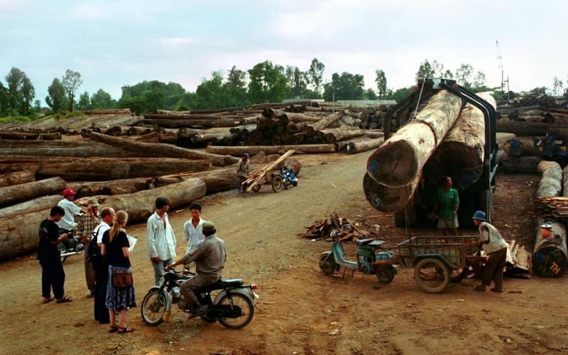 Recherche vor Ort: Holzverladeplatz in Indonesien