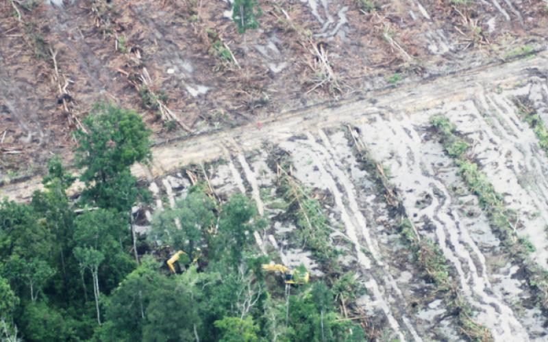 Kahlschlag im Tropenwald
