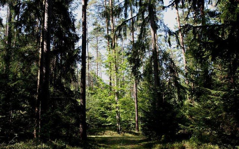 Die Vielfalt der Baumarten im Muna-Wald