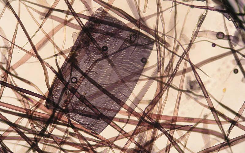 Papierfaser-Analyse eines Buches, gefunden bei Aldi Nord (2010)