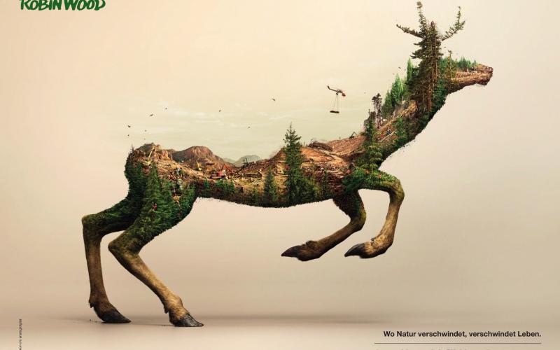 Reh Waldzerstörung Raubbau