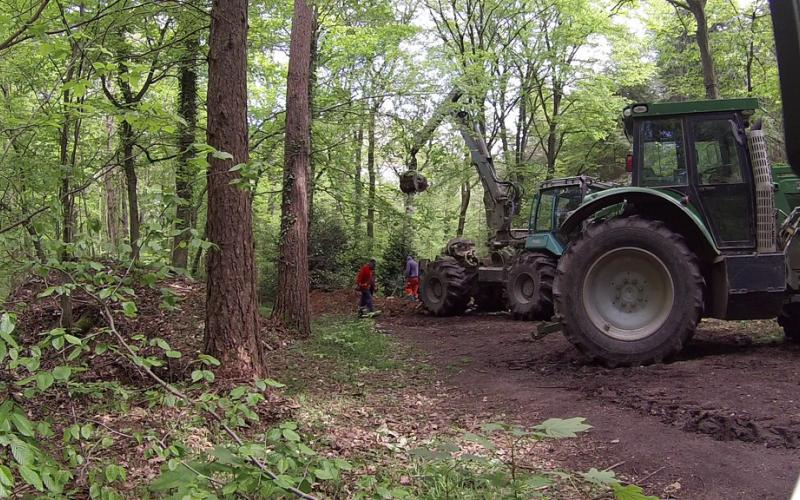 Rodung von Teilen des Hambacher Forsts
