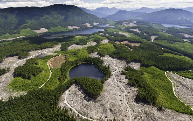 Great Bear Rainforest Timber