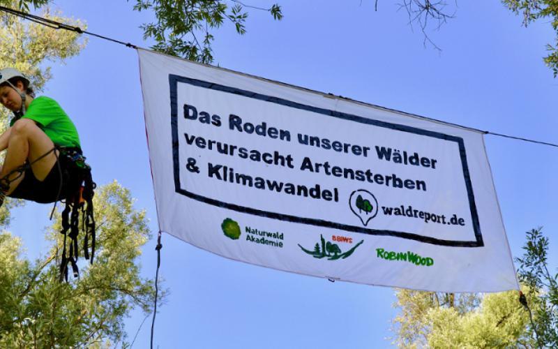 waldreport.de