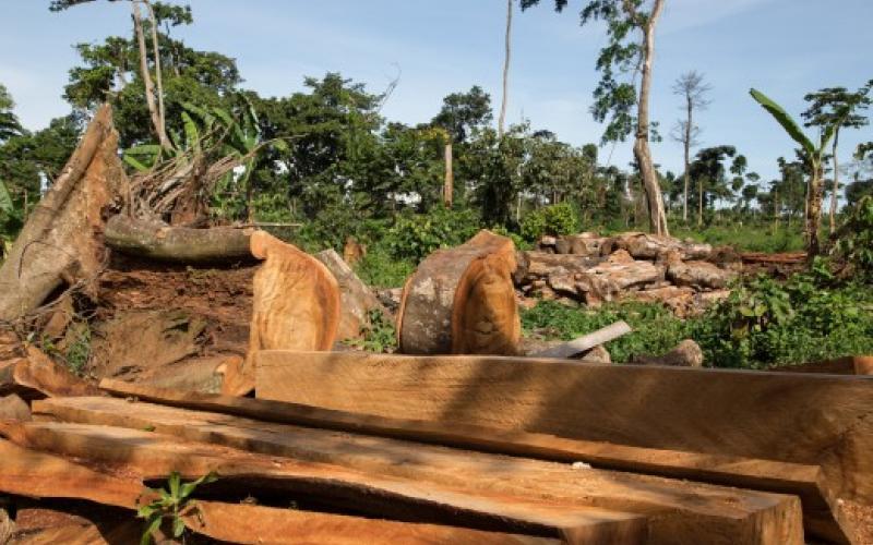 Tropenwald: gerodete Fläche