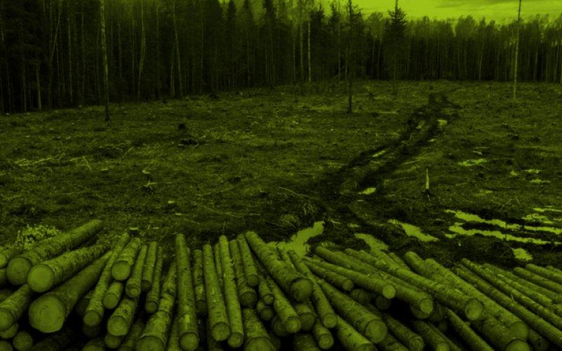 Kahlschlag für Kraftwerke in Estland, Foto: ELF/Karl Adami
