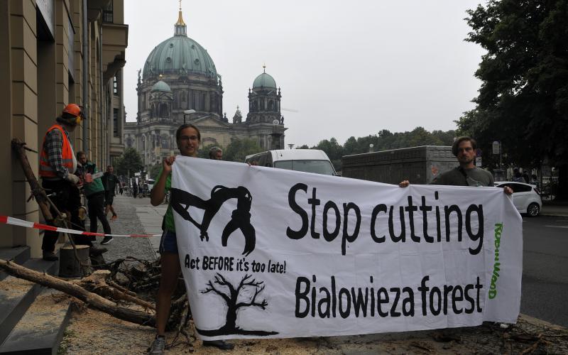 Save Bialowieza