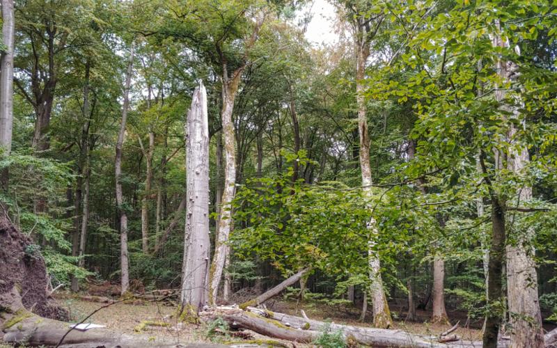 Die Wood Im Wald